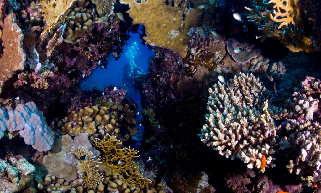 Diver on a coral reef. Copyright: B. Christensen/Azote