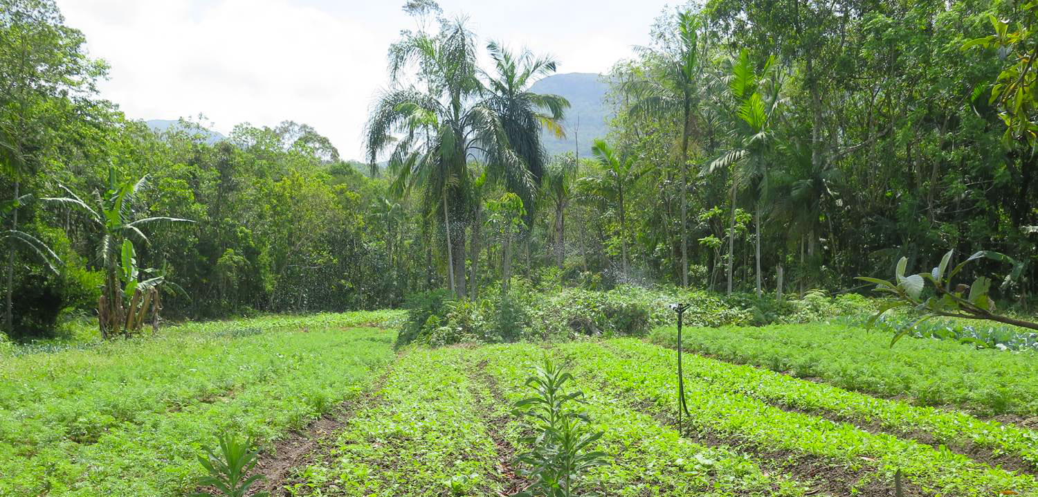 Mixing it up. Multiple crops (bananas, TK) grow together in agroecological landscape in Brazil. Copyright: TK.