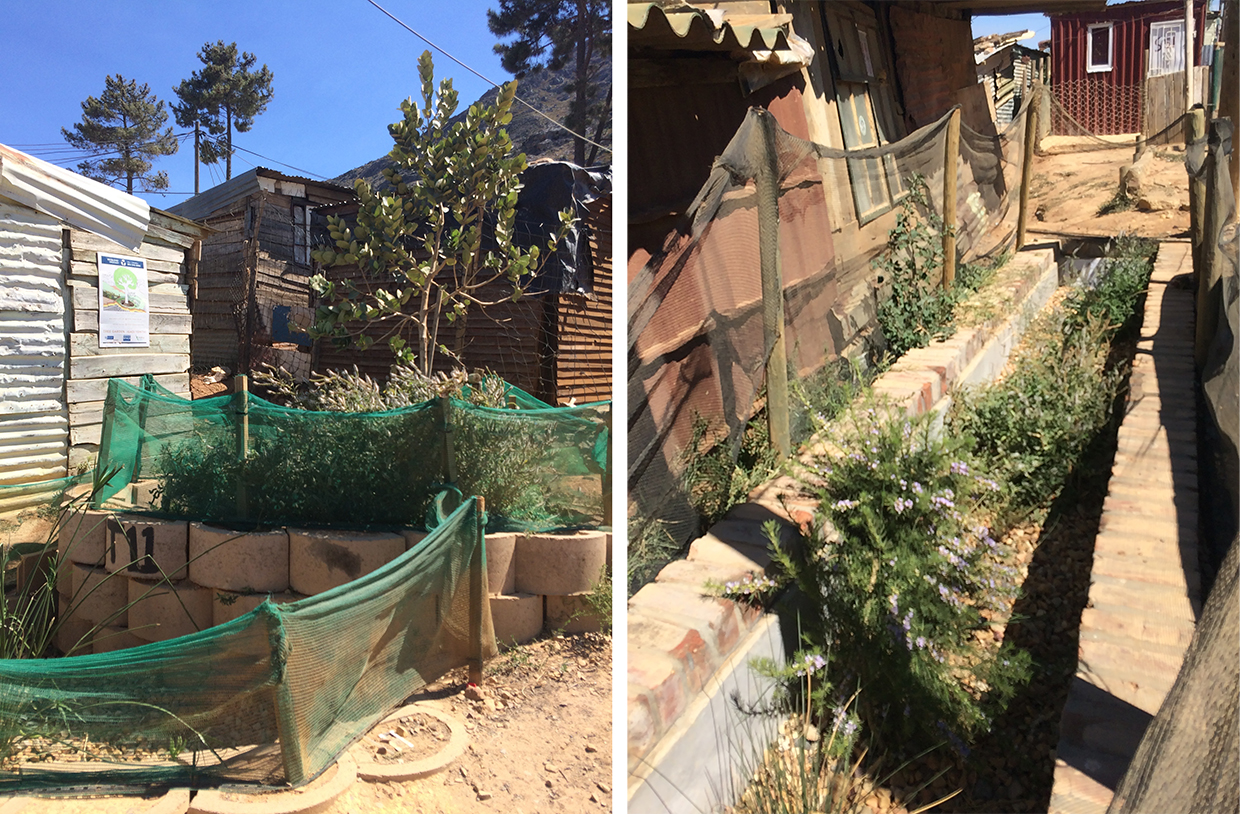 "Step 1: Tree gardens offer the first round of filtration and provide an indication of the extent of pollution. Copyright: Lauren Hermanus. 3. Step 2: Water flows from the tree garden into ""micro-wetlands"" to undergo a second round of filtration and cleaning. Copyright: Lauren Hermanus"