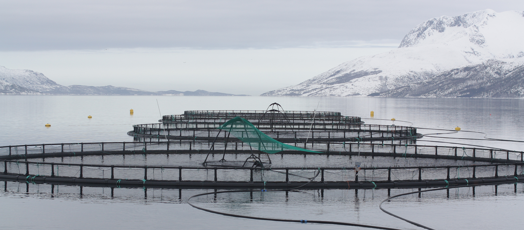 fish cages in a Norwegian fjord. https://commons.wikimedia.org/wiki/File%3AFish_cages.jpg