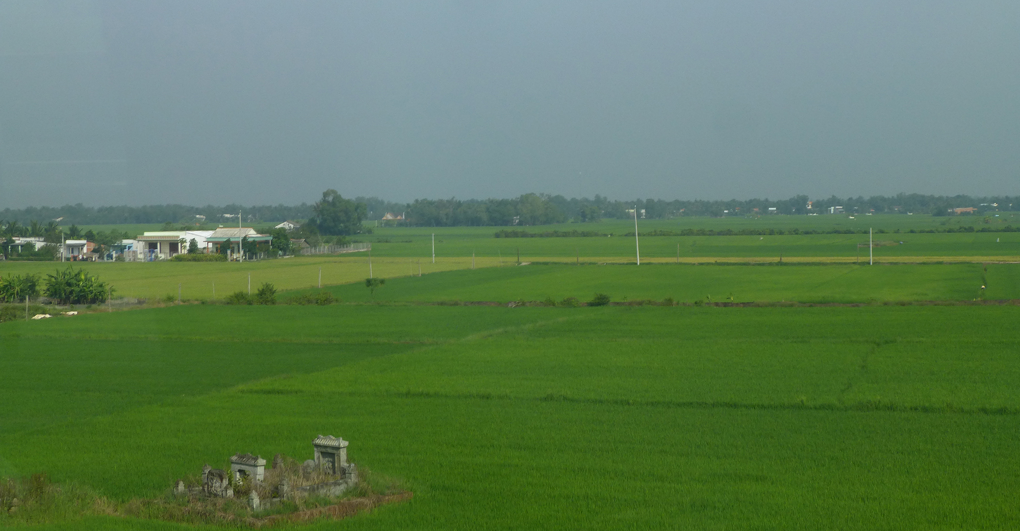 Rice fields with a memorial for a farmer that most likely spent his life working the land. Copyright: Erica Gies.