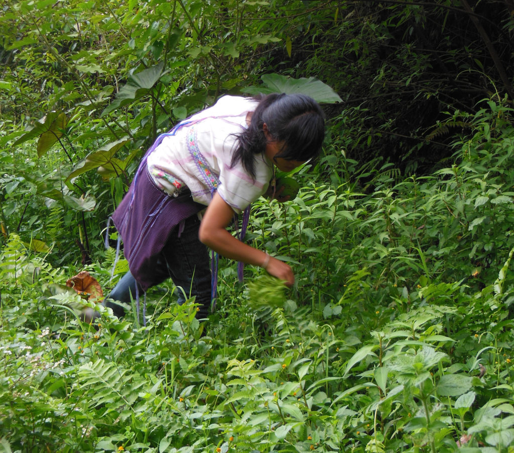 A young woman from the Hin Lad Nai community searches for supper greens in the now-lush forest. Copyright: Pernilla Malmer.
