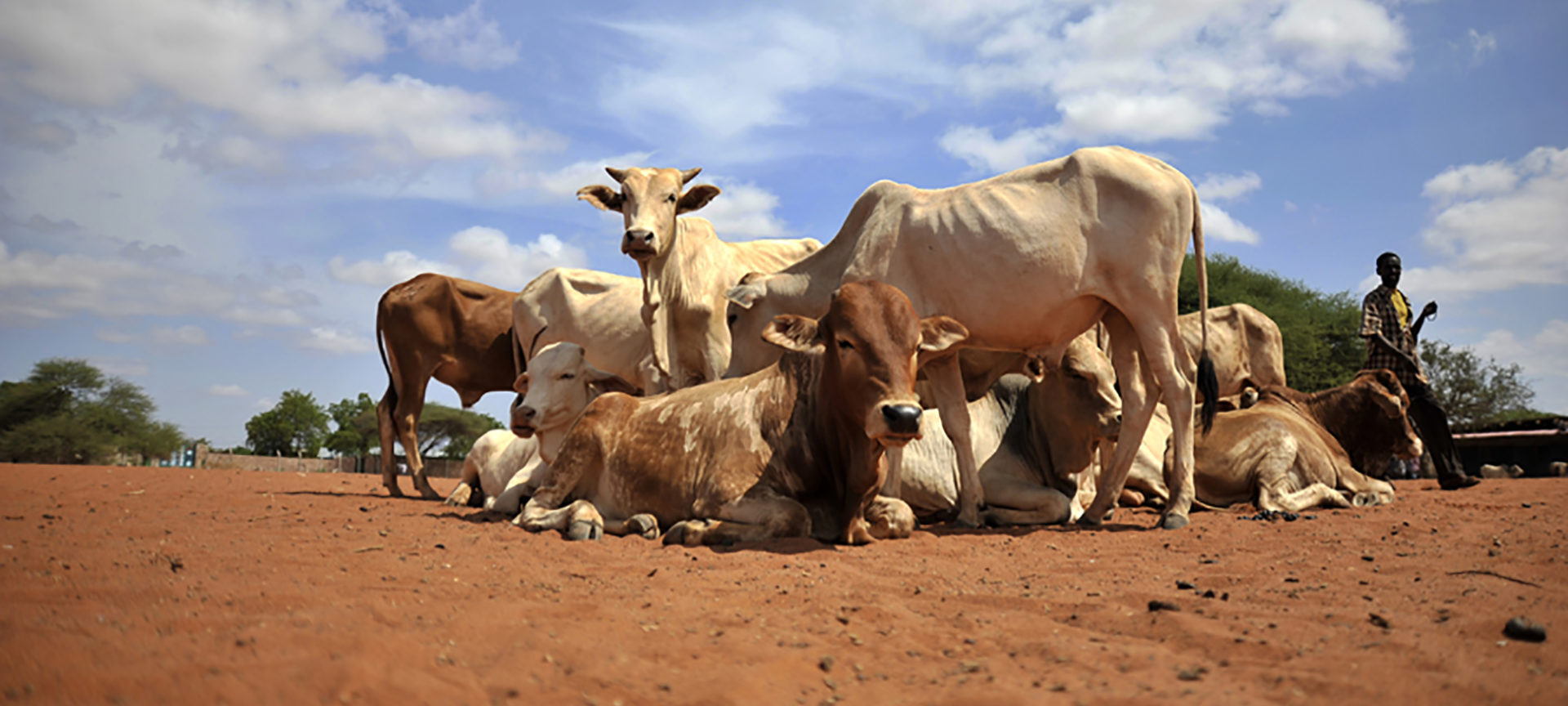 Livestock market in Wajir. Courtesy of IBLI.
