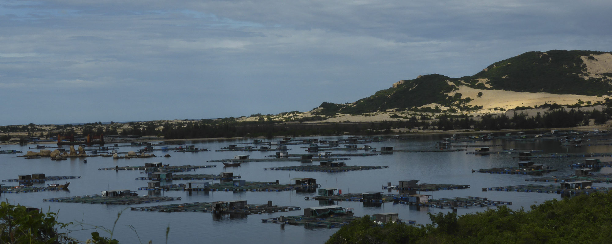 Shrimp farms off the coast of Whale Island in Vietnam. Aquaculture, like other meat production, typically uses large quantities and several kinds of antibiotics. Photograph: -JvL-/flickr