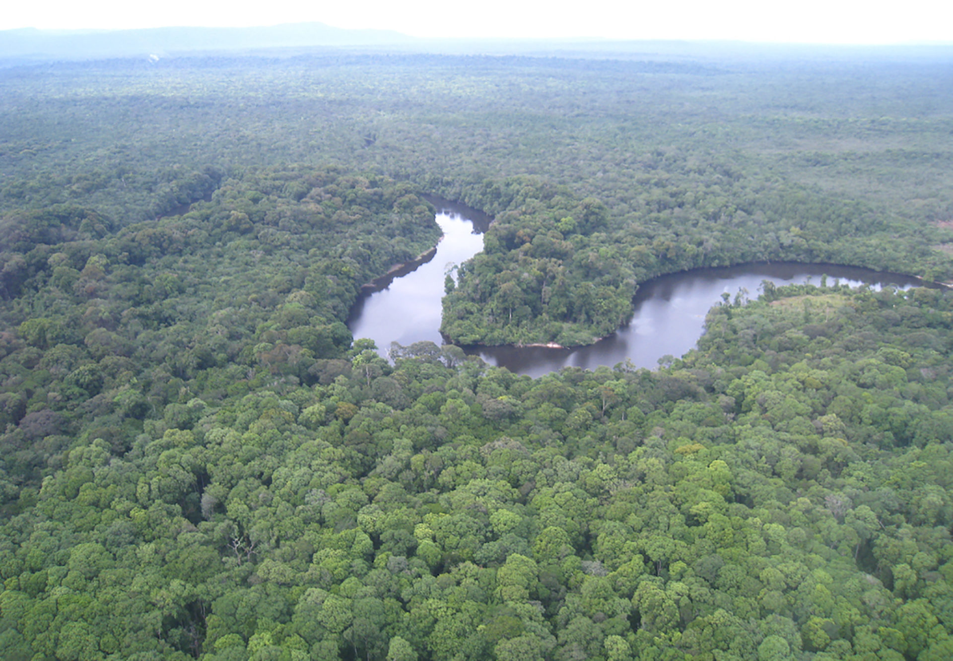 """Potaro River and the """"endless"""" rainforest, which looks like broccoli from the air. Photo: Erica Gies."""