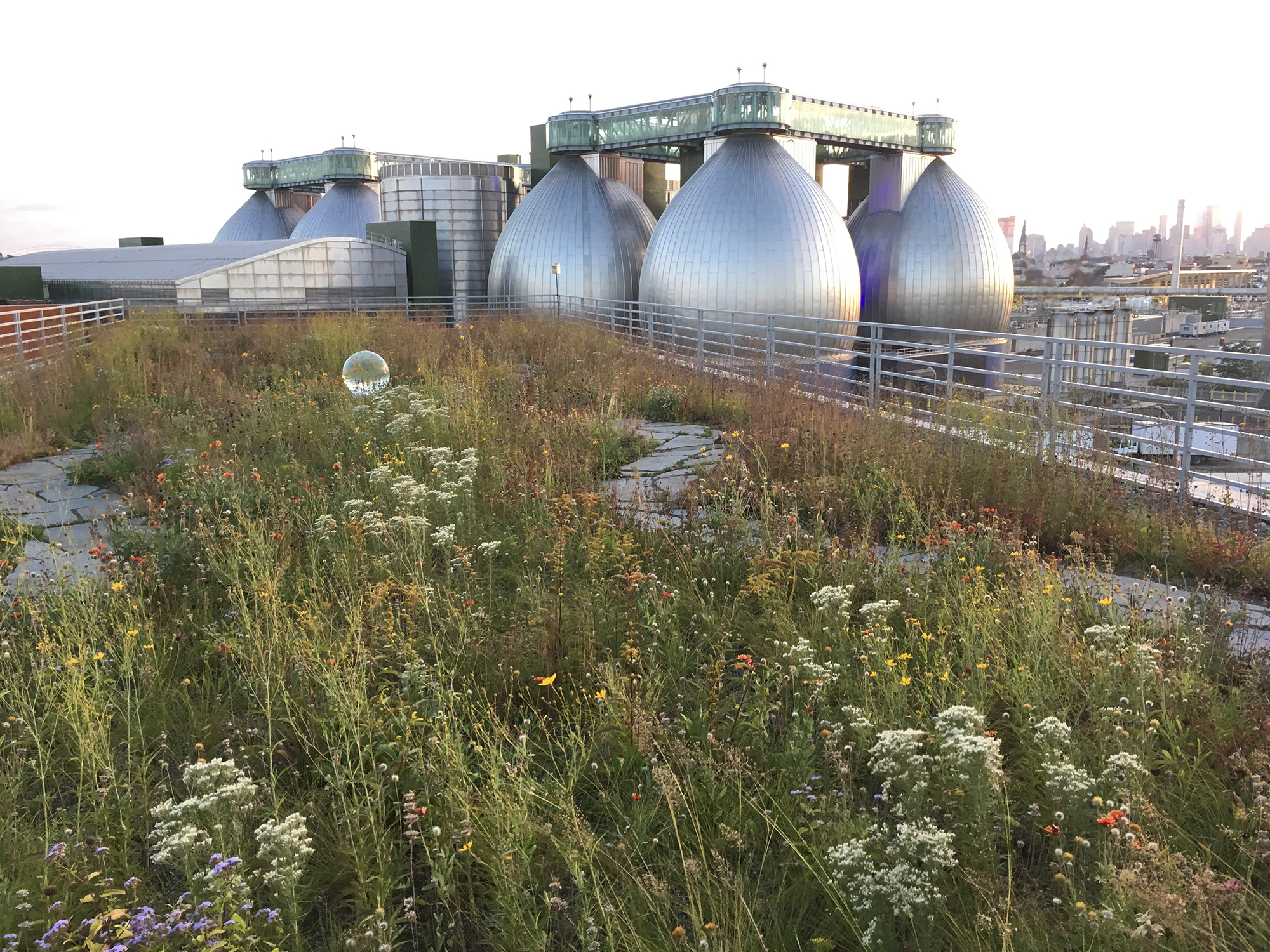 A green roof atop a warehouse centre in Greenpoint, the Kingsland Wildflowers project serves wildlife and people in creating an open green space, funded by the Greenpoint Community Environmental Fund. Photo: Johanna Jelinek Boman.