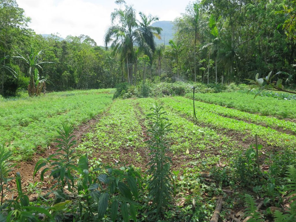 Agroforestry systems mix crops, trees and animals, and provide resilience by e.g. strengthening ecological connectivity with forest fragments, maintaining biodiversity and managing slow variables like soil fertility and water quality. Photo: K. Höök.