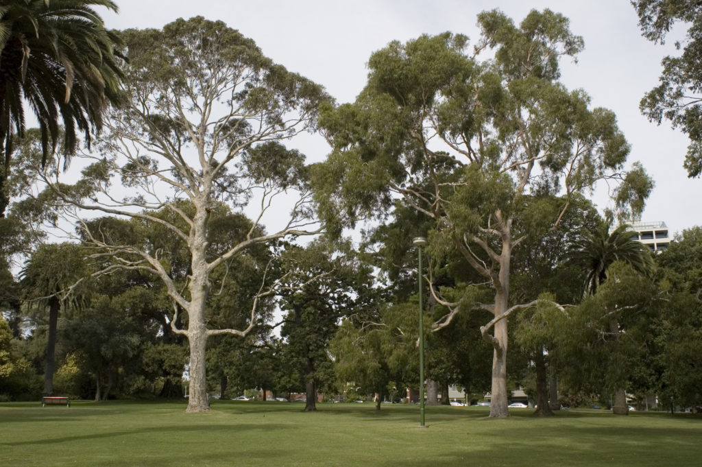 Forested park in Melbourne. Photo copyright: D. Kendal