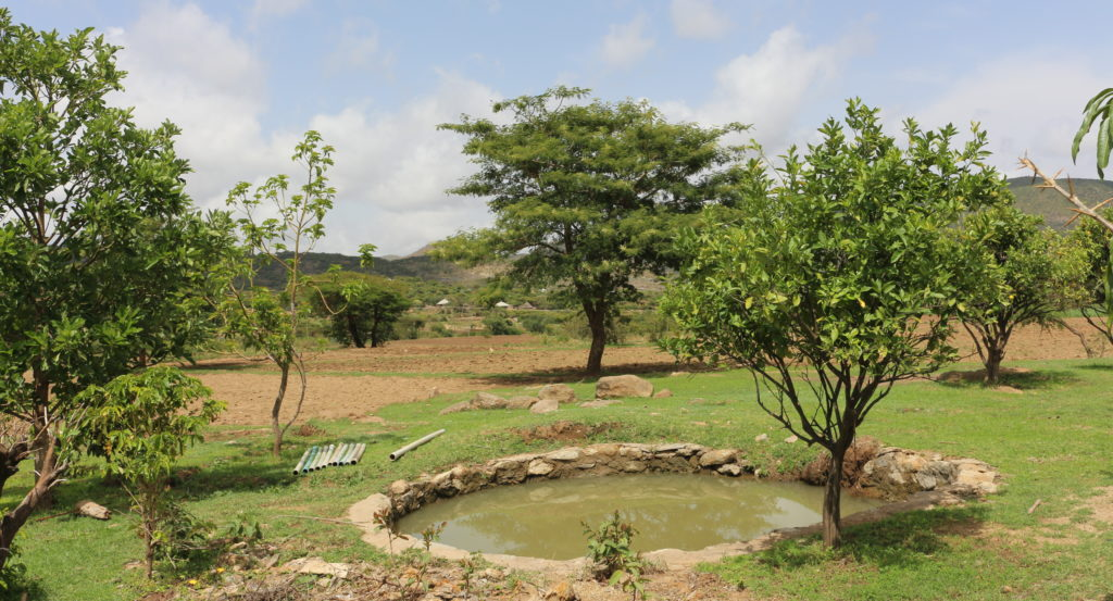 Rainwater harvesting is one important strategy in Ethiopian agroecological farming that builds resilience to drought. Photo: A. Gonçalves.