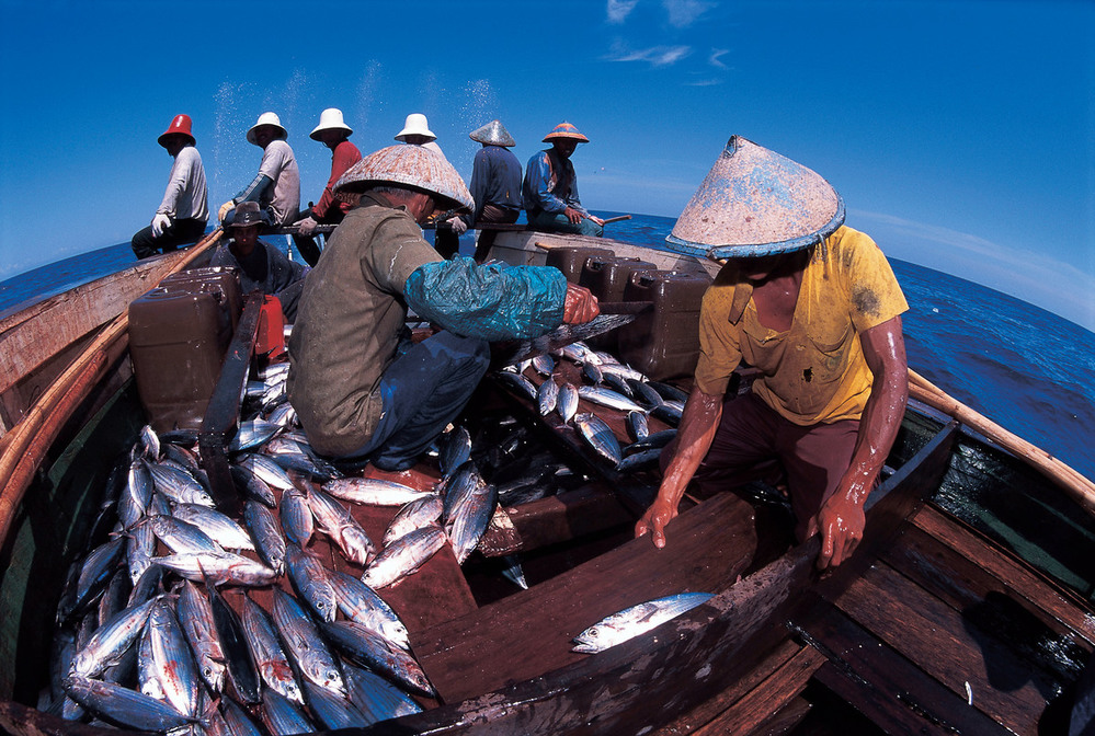 Fishermen sorting tuna after catch. Indonesia