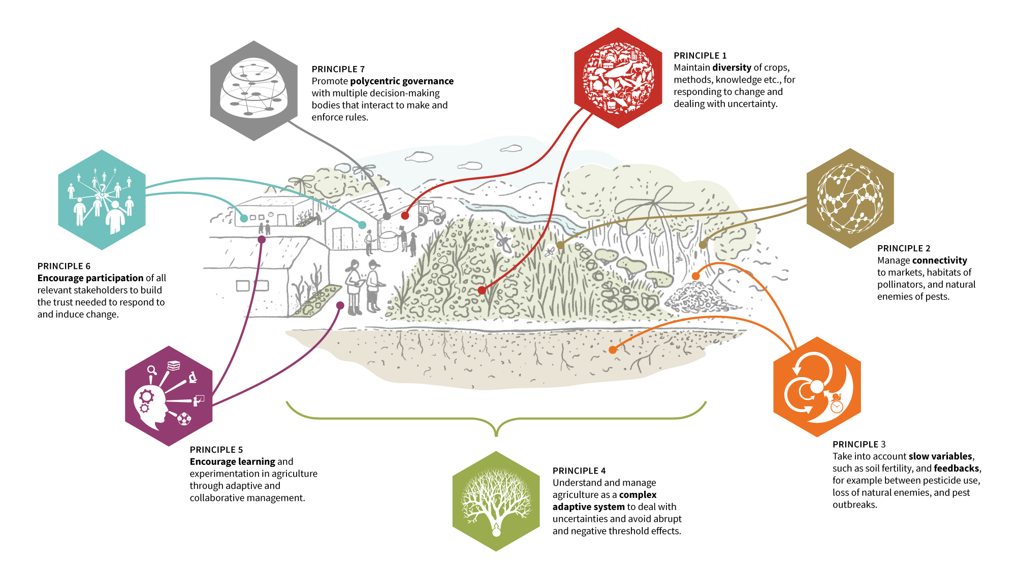 Agroecological approaches often go hand in hand with resilience thinking. Andé Gonçalves' research has looked at how the seven resilience principles manifest in practice in agroecological farming. Illustration: E. Wikander/Azote