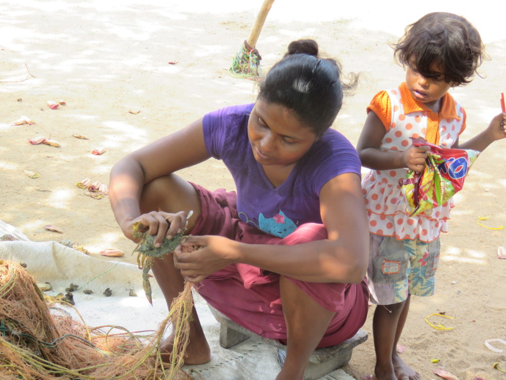A woman collecting crabs from fishing nets in Sri Lanka. Photo by Sudeesa.