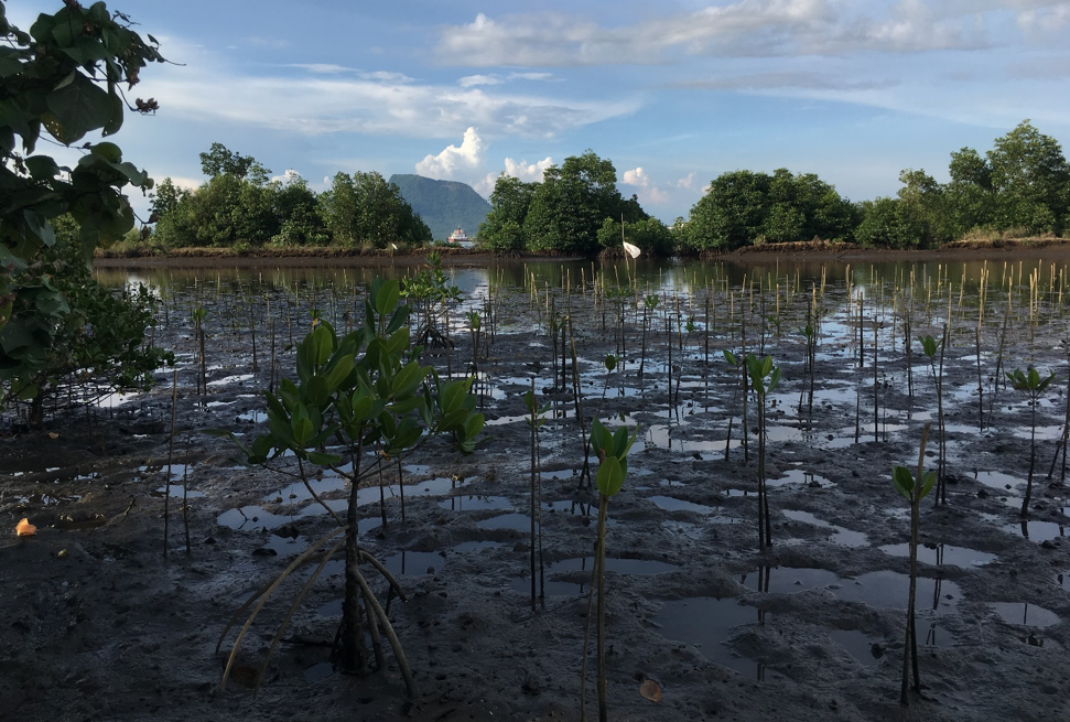 One Architecture's Nusa-Tula mangrove replanting site near Tacloban City. Photo. S. Verkaart