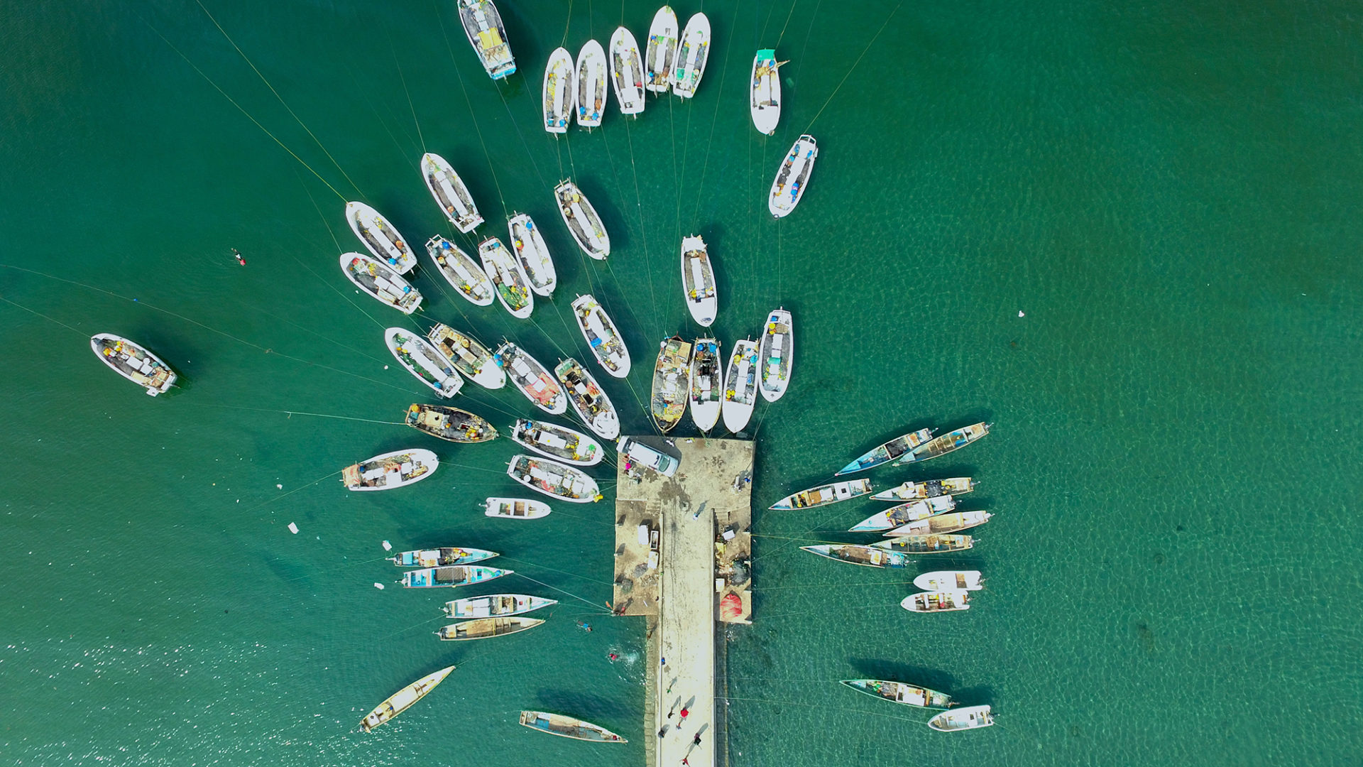 A bird's eye view of a fish being offloaded on the jetty of Berbera Harbor_ Credit_ One Earth Future iZone Media