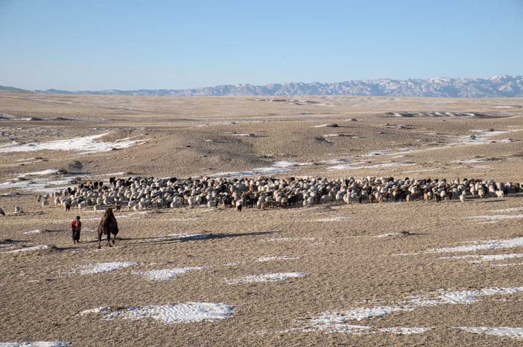 Thousands of people give up their nomadic lifestyle each year, to move to Ulaanbaatar. Photo: J. Pasotti